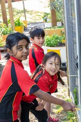 School Programs Hillcrest Primary School